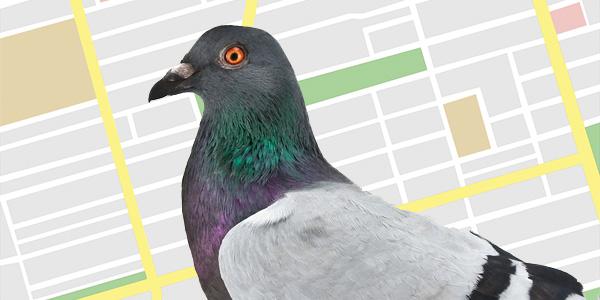 Phân tích của các chuyên gia về bản cập nhật Pigeon của Google